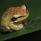 Little Froggy! by KiriLees