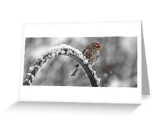A Red Poll -- Waiting Out The Storm Greeting Card
