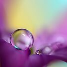 Drops of Spring Colour by Sharon Johnstone