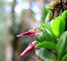 Tiny Tree Orchid by Vanessa Barklay