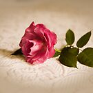Rose vingnette by Margaret Whyte