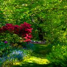 Peaceful Path in the Garden by Monica M. Scanlan