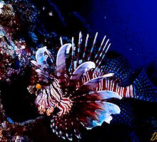 Lionfish 2 by Dawn Eshelman