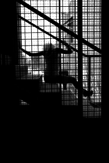 Caged Silhouette by Jordan Miscamble