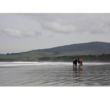 The Horses - Monkey Island - NZ Photographic Print