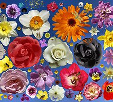 Flower Arranging. by albutross
