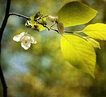Spring Aglow by Jonicool