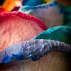 Rainbow Rose by George Parapadakis (monocotylidono)