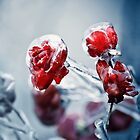 Iced roses 2 by DanielVijoi