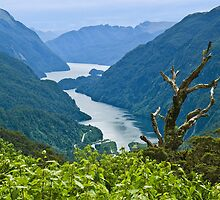 Doubtful Sound from Wilmot Pass by Yukondick