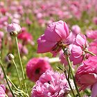 A Sea of Pink by Cleber Design Photo