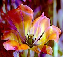 *Fiery Tulip* by DeeZ (D L Honeycutt)