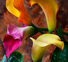 Four Calla Lillies  by Garry Gay