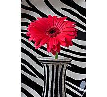Red Mum In Striped Vase Photographic Print
