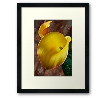 Yellow Calla Lilly  Framed Print