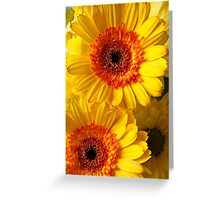 Two Yellow Orange Mums Greeting Card