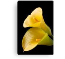 Pair of Yellow Calla Lilies  Canvas Print