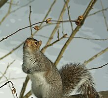 A Squirrel's Dilema by Margie Avellino