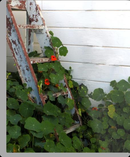 """Vine Climbing Old Steps"" by waddleudo"