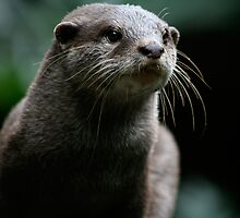 Curiousity killed the Otter by samsmith174
