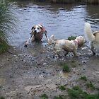 I think im a bit stuck! by chrissy mitchell