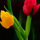 Simply Tulips by Audrey Clarke
