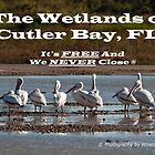 The Birds of Cutler Bay Wetlands  by Winston D. Munnings