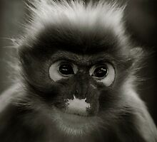 Not So Cheeky Monkey by John Dickson
