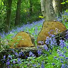 Bluebells 01 by Mark Tomlinson
