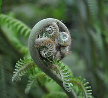 Birth of a Fern Frond by Dorothy Thomson