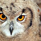 Eagle Owl Eyes by Angus Russell