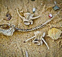 Sea Skeletons by BoB Davis