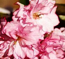Cherry Blossom Pink by Kay  G Larsen