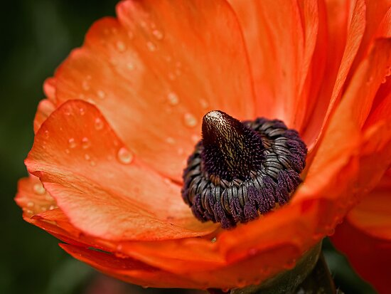 Dramatic blossom after the rain by Celeste Mookherjee