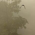 Misty Raven by sprucedimages