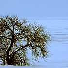 Lone Willow on a Frozen Shoreline by Lee Donavon Hardy
