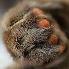 Cats Paw by Simon Duckworth