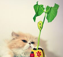 It's mine! by DanielVijoi