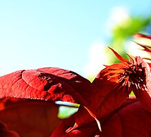 Red Leaves by David Mellor