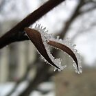 Ice Crystal Leaves by lindsycarranza