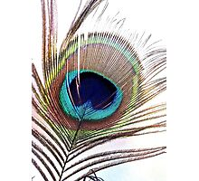 Feather of  a Peacock Photographic Print