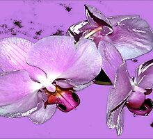 Purple orchids on purple background by ♥⊱ B. Randi Bailey