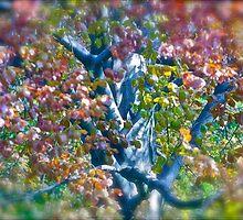 Spring Wonders - Green Day . by Brown Sugar .Green Day Boulevard of broken dreams . Yeah  friends !!! Favorites: 3 Views: 366 .THANKS. by © Andrzej Goszcz,M.D. Ph.D