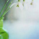 Fresh Spring by Priska Wettstein