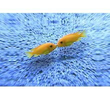 Kissing Fishes Photographic Print