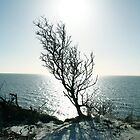 Tree Sea Sun Snow by Barnewitz