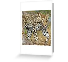 Leopard on the hunt-running! Greeting Card