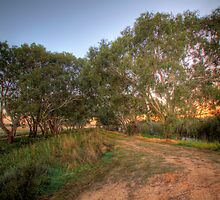 Gum Tree Lane - Murray Bridge, South Australia by Mark Richards