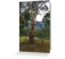 Gum tree Megalong Valley NSW Greeting Card