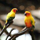 The birds of Asia series # 9 by debjyotinayak